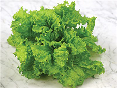 Image of Leaf Lettuce