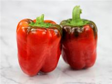 Pepper : Sweet Bell